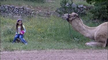 Een kameel als gids