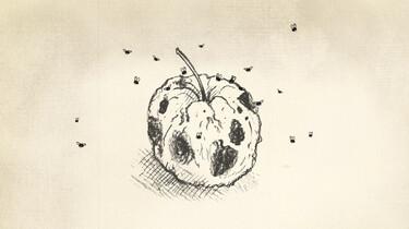 Clipphanger: Waar komen fruitvliegjes vandaan?