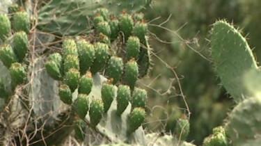 Planten in Marokko