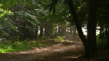 De functie van bossen