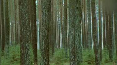 Bosbouw in Zweden