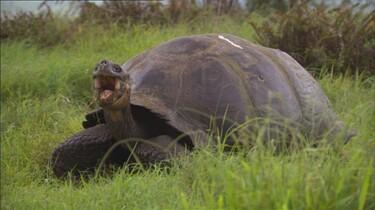 Land- en zeeschildpadden