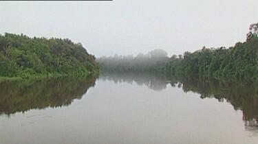 Het tropisch regenwoud