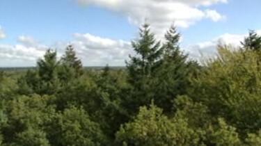 Lagen in het bos