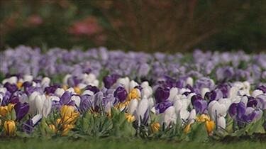Vroege bloeiers