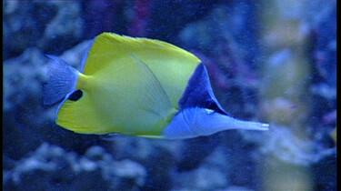 Vissen kijken in alle kleuren