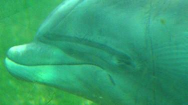 Dolfijnen: Hoe slapen dolfijnen?