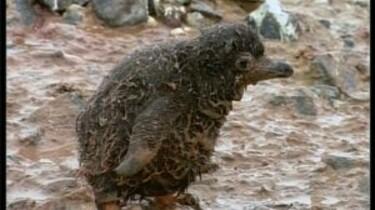 Pinguïns en het broeikaseffect