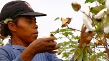 Werken op een katoenplantage
