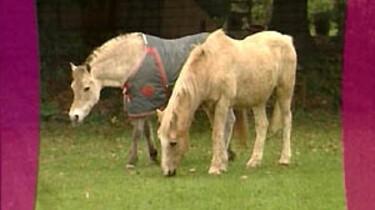 Paardenpensioen