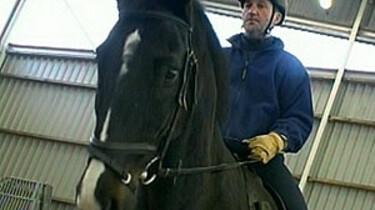 Het politiepaard
