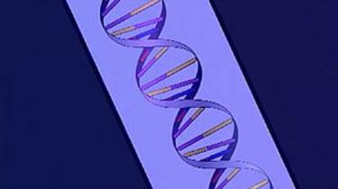 DNA-profiel