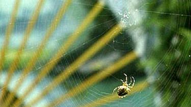 Spinnen zoeken
