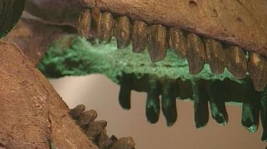 Skelet van een dinosaurus