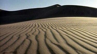 Woestijnleven