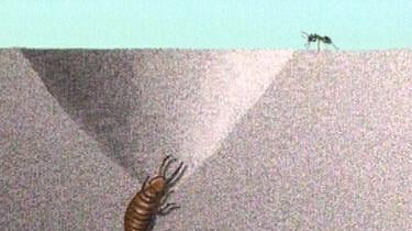 Mierenleeuw vangt mier