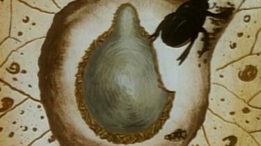 Geboorte van een mestkever