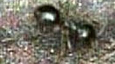 Mieren bekijken