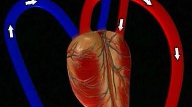 Hart- en bloedvaten
