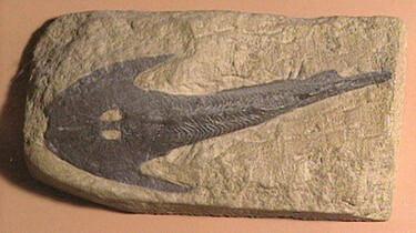 Fossielen