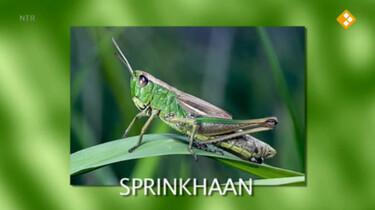 Nieuws uit de natuur: Sprinkhanen en krekels