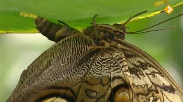 Nieuws uit de natuur: De vlindertuin