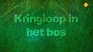 Nieuws uit de natuur: Kringloop in het bos