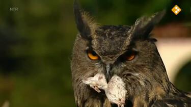 Nieuws uit de natuur: Uilen en muizen