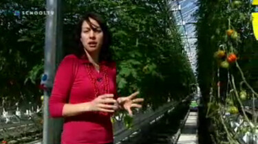 Nieuws uit de natuur: Plantenkas