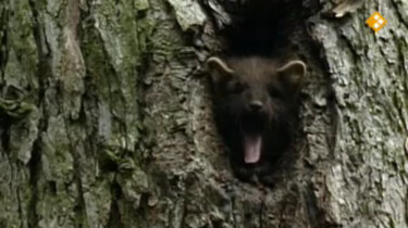 Nieuws uit de natuur: Zoogdieren