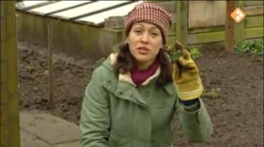 Nieuws uit de natuur: Plantenverzorger