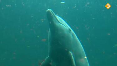 Nieuws uit de natuur: Dolfijnen