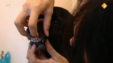 Nieuws uit de natuur: Dieren helpen mensen