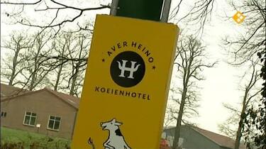 Het Klokhuis: Koeienhotel