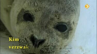 Het Klokhuis: Zeehondenopvang