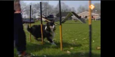 Het Klokhuis: Hondensport