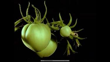 Bio-bits vmbo: planten: Bloemen en vruchten