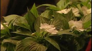 Bio-bits vmbo: planten: Stengels