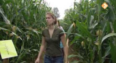 Bio-bits vmbo: Nederlandse natuur: Het platteland