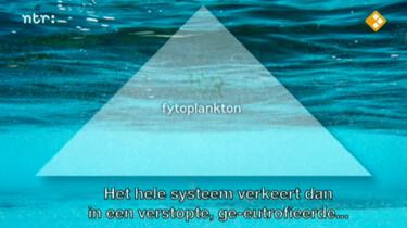 Bio-bits bovenbouw Ecologie: Oceanen: voedselweb en energiestromen