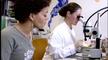 Bio-bits bovenbouw: Evolutie: Argumenten voor evolutie.