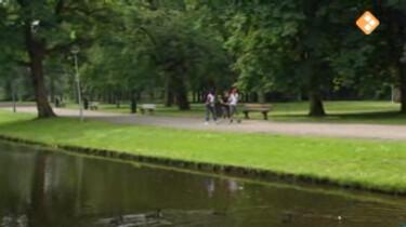 Bio-bits vmbo: Nederlandse natuur: De stad