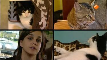 Het Klokhuis: Kattengedrag