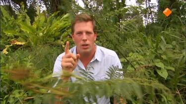 Freeks wilde wereld: Anaconda Mimosaplant