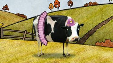 Evie the cow