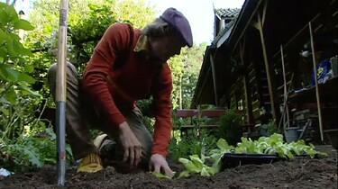 Werken in de groentetuin