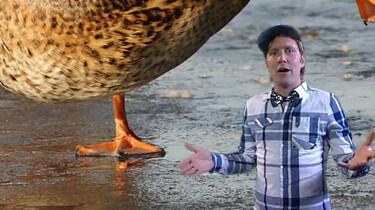 Krijgen eenden geen koude pootjes op het ijs?