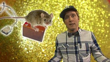 Waarom is de computermuis vernoemd naar een muis?
