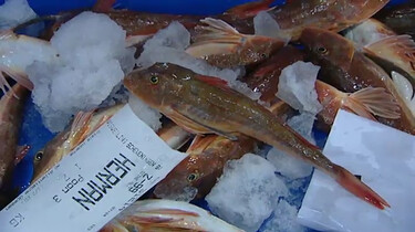 Van vis in de zee, naar vis in de winkel