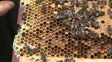 Waarom zijn bijen nuttig?